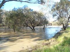 Bogan River in Flood at Nyngan (Wilderness Kev) Tags: australia newsouthwales nsw redcentreholiday2016 day1 nyngan boganriver