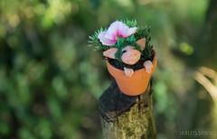 Garden Troll (Shirleys Studio | Handmade Art Dolls) Tags: shirleysstudio shirleys studio beeldende kunst art artist grotto troll ooak dolls trollen trolletjes boswezens fantasy doll artdoll trol trolls figurine handmade