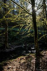 Un rayo de sol (SantiMB.Photos) Tags: 2blogger 2tumblr 2ig rboles trees luz light contraluz backlight baztn navarra otoo vacaciones2015 igantzi espaa esp