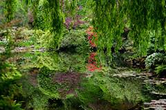 Reflet vert perturbant (dodo-12-37) Tags: victoria canada bc ile de vancouver plage bernache panoramique oiseau cerf volant olympic mountain bouchart garden reflet fleurs arbre fontaine