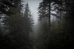 misty forset (oliverft) Tags: valleedesfantomes trees misty mist quebec green nature parcnationaldesmontsvalin parcsqubec parcs nationalpark spaq montsvalin trail hiking gloomy gloom spooky forest clouds cloudy