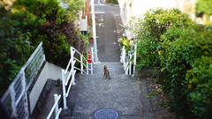 Stray cat in Nagasaki (fringenious) Tags: cat japan nagasaki straycat wildcat stairs