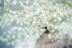 Gypsophila (photoart33) Tags: stilllife gypsophila babiesbreath vase textured soft white