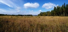 savojrvi_panorama (Paivi Hannele) Tags: finland ourfinland landscape luonto kasvi maisema vesi puut thisisfinland joki jrvi syksy autumn