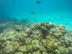 Korallenriff tauchen Malediven