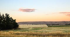 Haystack (wyojones) Tags: montana belfry clarksforkvalley clarksforkoftheyellowstone hay field roundbales badlands sunset trees farm ranch fence barbedwirefence bobwirefence