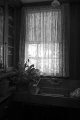 Behind the window / Derriere la fenetre (CTfoto2013) Tags: livingmuseum stilllife lumiere light naturemorte interieur atmosphere ambiance mood dof depthoffield lumix gx7 panasonic mirrorlesscamera micro43 ombres shadows vermont hildene manchester bn nb bw indoor window fenetre blackandwhite fleur flower monochrome plant plante kitchen cuisine sink evier rideaux curtains ombre shadow