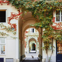 Schnen Herbstanfang! (www.juliadavilalampe.com) Tags: autumn vienna austria sterreich cat animal city europe love myhome happyme otoo herbst fall leaves facade red