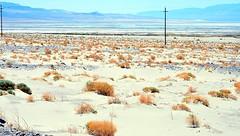 Cette contrée appartient, comme Mono Lake et Bodie, à la province géologique du Grand Bassin. En d'autres termes, la région est quasi désertique. (Barbara DALMAZZO-TEMPEL) Tags: california usa desert mount whitney sierranevada désert grandbassin montwhitney route136 owenlake road136 lacowen