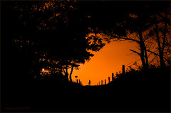 (n)Akt ... auf der DÜNE ... (Freddersen FF®) Tags: sunset red orange woman sun sexy rot beach nature beauty silhouette strand sunrise naked nude landscape deutschland nikon soft paradise erotic akt all natur award sigma balticsea nackt exotic voyeur nudist frau landschaft sonne bäume ostsee baum sonneuntergang fkk nakedness natures nudism romantik untergang erotik nass haut fischland mecklenburgvorpommern harmonie brandung nudebeach brust schlank ruhe schön dierhagen nudistbeach dars nudebathing aktfotografie nackig nikond7000 barenes allnaturesparadise nacktfotografie