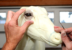 eye sculpting (bigbuzzhunt) Tags: eye glass taxidermy deer mount clay form shoulder mckenzie whitetail