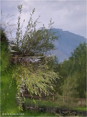 Le site à libellules (bis repetita)