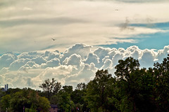 Harmless Explosions (Matt Molloy) Tags: trees sky seagulls house nature silhouette clouds photography flying timelapse crazy amazing fluffy smokestacks soaring explosions pillars birs lovelife mattmolloy