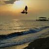 ***** (wolfgangfoto) Tags: sunset color bird peace free wave gpc soulscapes diamondclassphotographer flickrdiamond wolfgangfoto