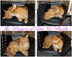 The Passion of Zeus & Phoebe (youtube.com/utahactor) Tags: red orange cats silly love true sport yellow mackerel ginger amazing jumping feline chat humorous play kodak tabby adorable kittens gatos spooky whiskers tricks story phoebe zeus gato precious passion devotion gata tabbies felines spotted hd katze popular  darling gatto nursing kater videos striped furbaby chasing tomcat gattina gattino gatas gatta purring furbabies  youtube  chatze friendsofzeusphoebe