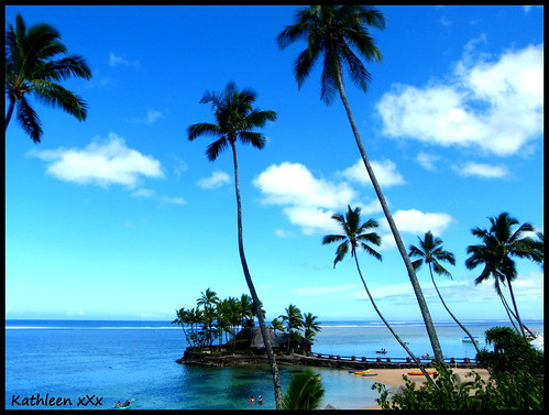 Fiji coconut trees