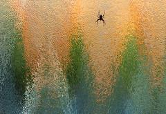 Wildlife on the frontdoor (Pepijn Hof) Tags: color macro glass canon spider spin nat compo 100mm national 7d geo dier glas nationalgeographic kleur voordeur natgeo haastrecht nominatie publieksprijs nationalgeographicfotowedstrijd2012