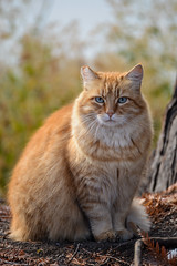 Portrait of a feral cat (AnotherSaru) Tags: wild cat river nikon blueeyes gato mao stray gata neko feralcat  d600 noraneko tamron70300mmlens