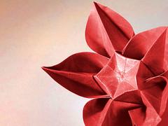 Carambola (Carmen Sprung) (Danielle Verbeeten) Tags: paper origami papiroflexia folding carambola sterfruit papiervouwen carmensprung