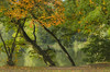 Leaning over (Gies!) Tags: trees lake fall nature colors stairs natureza herfst leaning hengelo thegalaxy flickraward kleigat mygearandme mygearandmepremium mygearandmebronze ringexcellence bewiahn