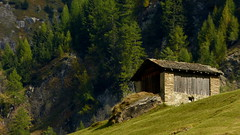 En los Alpes suizos (Miradortigre) Tags: suiza swiss switzerland alpes alps alpen green
