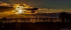 Glowing Fringe (MyWorldThroughMyLens) Tags: bramhope england unitedkingdom gb sunset lowsun field grass clouds silhouette