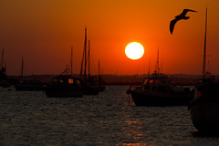 Sunset 6 (Paulfeb282) Tags: paulfeb282 paulcoxon paul coxon dorset sandbanks beach sunrise sunset sea front sunny day