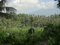 DSC05301.jpg (J0celyn79) Tags: asie bali indonésie karangasem id