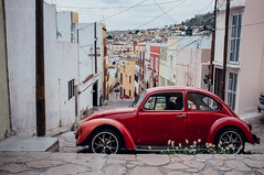 ({impossible princess}) Tags: zacatecas mexico beetle
