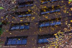 DSCF6206-Edit.jpg (Sav's Photo Gallery) Tags: fallenleaves ladywell leaves lewishamhospital reflection river savash