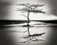 Paulo Campos (Photographer/Photojournalist) Tags: black white landscape landscapes paisagem paisagens nature natureza beuty highlights flicker 2016 water tree photography pretty cool sweet branco monocromtico ar livre preto pessoas na flickr