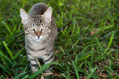 Fisher-0322.jpg (BrianLeeFisher) Tags: mozambique pemba cats