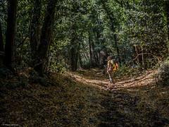 Nel bosco (fil_de_fer) Tags: 2016 italia viafrancigena sentiero toscana bosco wood forest path