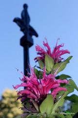 Garden Art (kfbrammer) Tags: ornament fleurdelis gardenart pink