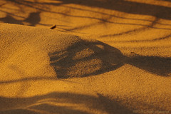 Belgian coast (Natali Antonovich) Tags: belgiancoast wenduine northsea sand belgium belgie belgique shadows seashore parallels