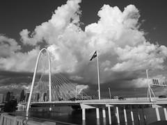 Dallas (pinkalyssum) Tags: dallas black white blackandwhite photo blackandwhitephotograph fugi fugifilm texas