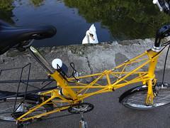 Admire (stevenbrandist) Tags: moulton moultonbicyclecompany moultonbicycleclub bradfordonavon boa bicycle