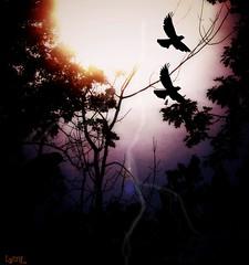 Halloween Sights (Lynn English-busy) Tags: october sights halloween ntrees lightening birds inspiredbylove