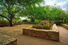 A Different Garden (John C. House) Tags: everydaymiracles nik nikon d700 phoenixbotanicalgarden desert johnchouse cactus aurorahdr southwest phoenix arizona hdr