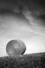 Rollin' In The Hay (ReportageImages) Tags: leica sky cloud field 28mm harvest summicron hay asph bail rollin m9 the in