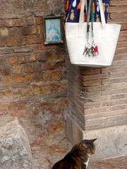 the non-catholic cemetery also serves as a kind of cat sanctuary (janna banna) Tags: rome cat catsanctuary