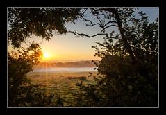 Morning Mist (SFB579 :)) Tags: morning blue sky orange mist tree leaves fog clouds sunrise early bush glare pentax farm low sigm