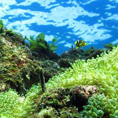 tumblr_m9ygqpnjEx1qj4ep6o1_1280 (d3_plus) Tags: snorkeling freediving izu g12    togai hirizo    nakagi canonpowershotg12  is04