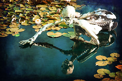 narcissus 2 (EwaHB) Tags: sculpture water skeleton pond lily thegrove narcissus