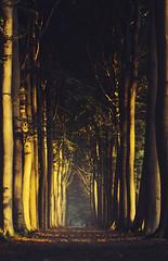 Filtered (Explore #9, 12.09.2012) (Mathijs Delva) Tags: morning trees light sun sunlight mist nature misty fog forest sunrise early woods foggy dew lane filtered 100mmf28macro