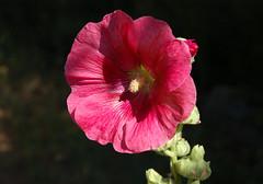 salope anal 9 mature au soleil