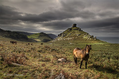 Exmoor Pony (Explored Front Page, Thank You) (Steve _ C) Tags: uk clouds canon coast pony 2012 exmoor valleyoftherocks 5dmk11 imageseen stevechatman