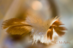 Light & feathers (mamamac2010) Tags: light backlight bokeh feathers explore depth colorsofthebeach 52weeks2012