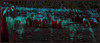 Emerald Night Herd. Explore Sep 21, 2012 #384 (Tim Noonan) Tags: light colour reflection texture water night digital photoshop elephants srilanka emerald mosca mystique hypothetical jungleriver vividimagination pinnawala artdigital shockofthenew stickybeak sharingart maxfudge awardtree maxfudgeawardandexcellencegroup magiktroll exoticimage digitalartscene netartii donnasmagicalpix vividnationexcellencegroup