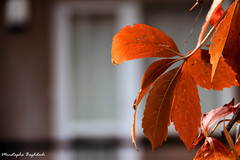 Fall .... پاییز (Moustapha B) Tags: camera travel autumn tree colors canon turkey alone memories 7d 90 18200 ankara رنگ پاییز مصطفي شرقی سفر خاطره 2011 آنکارا moustapha ترکیه برگ دلتنگی